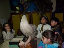 UNA NOCHE EN EL MUSEO. Casi de Película. Dormimos en el Museo Provincial de Ciencias Naturales Ángel Gallardo